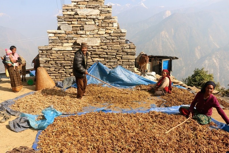 Nepalese people doing farm work on a mountain.